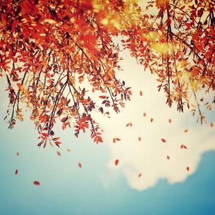 Beautiful vintage autumn backgroundの写真素材 [FYI00663575]