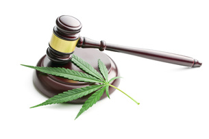 cannabis leaf and judge gavelの写真素材 [FYI00663638]