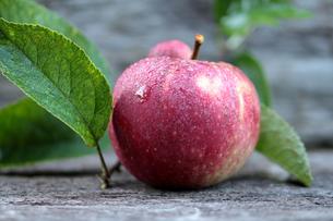 red autumn apple on rustic oak boardの写真素材 [FYI00664256]