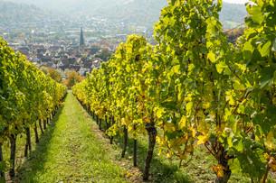 wine village geradstetten with vineyardの写真素材 [FYI00664513]