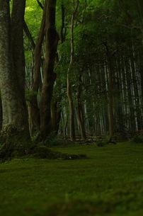 苔寺とと竹林の写真素材 [FYI00664862]