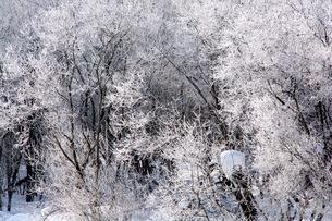 霧氷の写真素材 [FYI00664985]