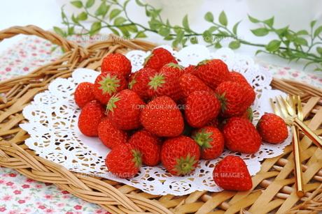苺の写真素材 [FYI00665012]