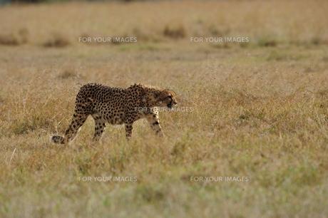 africaの写真素材 [FYI00665368]