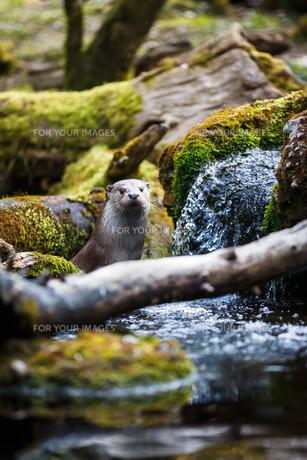mammalsの写真素材 [FYI00666380]