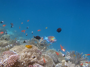 underwater_worldの素材 [FYI00666627]