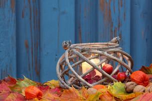 colored autumn wind light in autumnの写真素材 [FYI00666753]