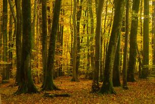 autumn forestの素材 [FYI00667020]
