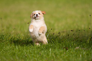 funny puppyの写真素材 [FYI00667184]