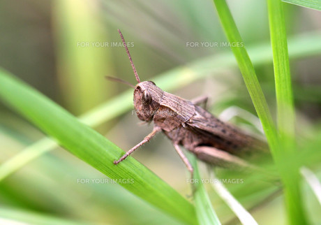 insects_spidersの写真素材 [FYI00667291]
