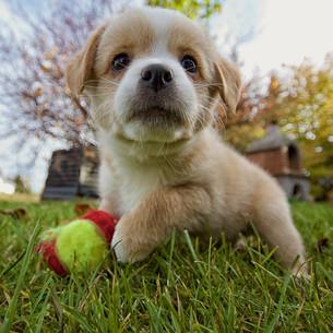 baby animalの写真素材 [FYI00667405]