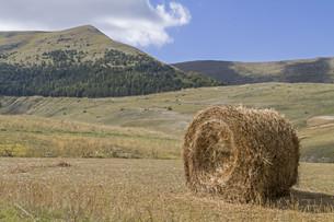 hay bales in umbriaの素材 [FYI00667619]