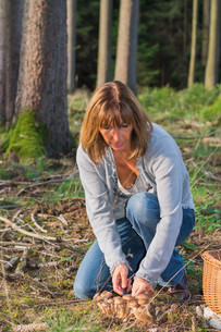 woman collects mushroomsの写真素材 [FYI00667844]