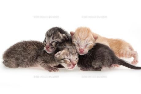 home_animalsの素材 [FYI00667957]
