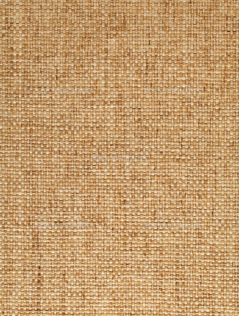 brownの写真素材 [FYI00668076]