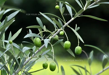 greenの素材 [FYI00668166]