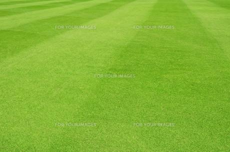 grass_fieldsの写真素材 [FYI00668299]
