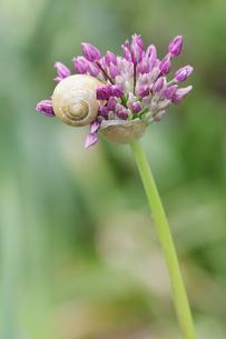 snailの素材 [FYI00668475]