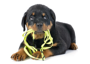 dogの写真素材 [FYI00668589]
