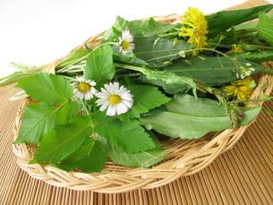 wild herbs in basketの写真素材 [FYI00668623]
