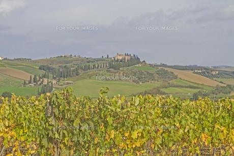 tuscany impressionsの素材 [FYI00669135]