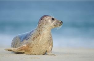 seal on the north coastの素材 [FYI00669142]