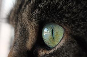 home_animalsの写真素材 [FYI00669400]