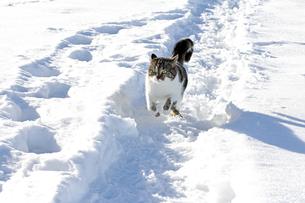 home_animalsの写真素材 [FYI00669403]