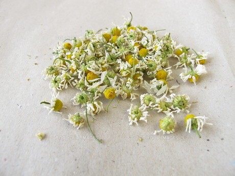 dried chamomile flowers on paperの素材 [FYI00669427]
