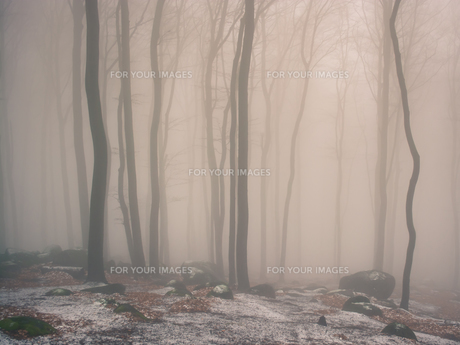 odenwald in the fogの素材 [FYI00669494]
