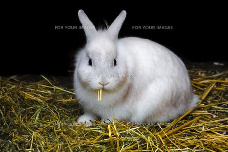 home_animalsの写真素材 [FYI00669774]