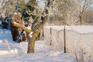 garden in winter - garden in winter 12の写真素材 [FYI00670300]
