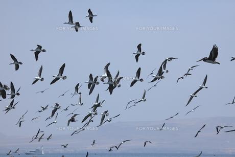 birdsの写真素材 [FYI00670303]