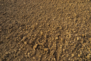 arable landの写真素材 [FYI00670443]