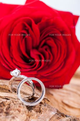 beautiful red rose and diamond ring jewelery on driftwoodの写真素材 [FYI00670737]