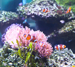 underwater_worldの写真素材 [FYI00670962]