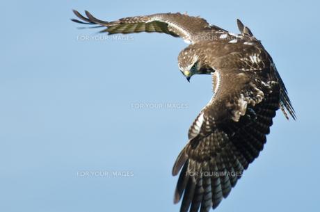 birdsの写真素材 [FYI00671335]
