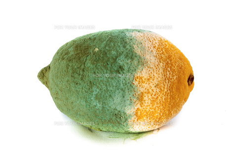 green moldy lemon citrus fruit isolated. damaged food.の写真素材 [FYI00671490]