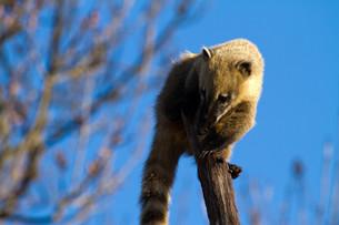 mammalsの写真素材 [FYI00671679]