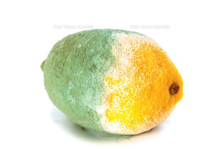 green moldy lemon citrus fruit isolated. damaged food.の写真素材 [FYI00671714]