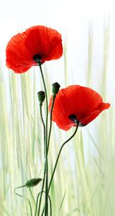 plants_flowersの素材 [FYI00671723]