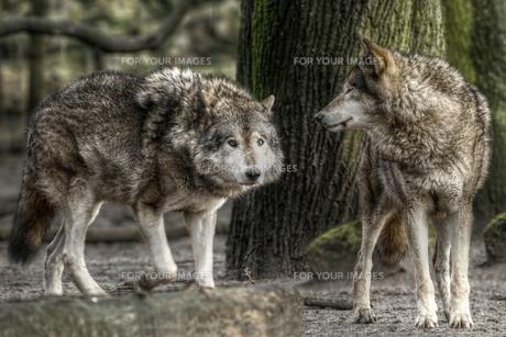 mammalsの写真素材 [FYI00672269]