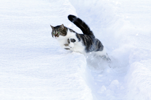 winterの写真素材 [FYI00672459]