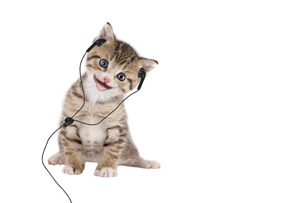 young cat listening music through headphones / headset on white backgroundの写真素材 [FYI00672611]