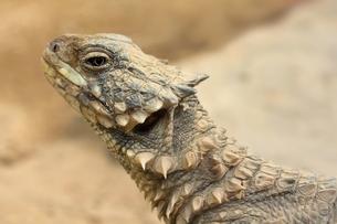 reptileの素材 [FYI00672902]