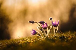 plants_flowersの素材 [FYI00672954]