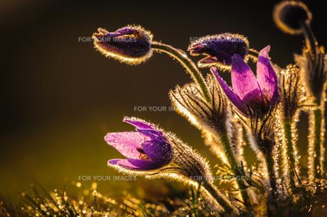 plants_flowersの素材 [FYI00672957]