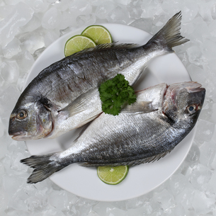 two sea bream fish on a plateの写真素材 [FYI00673066]