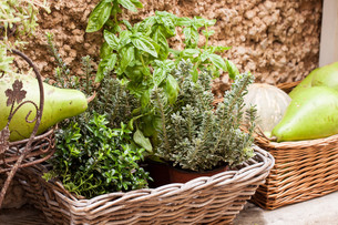 fruits_vegetablesの写真素材 [FYI00673171]