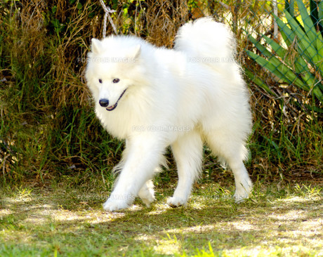home_animalsの写真素材 [FYI00673445]